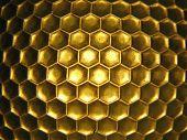 Bee Hive 4