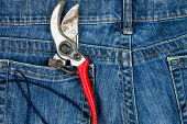 Pruning Shears In The Pocket Of Blue Jeans poster