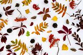 Pile Of Autumn Leaves, Pine Cones Nuts Over White Background. Collection Beautiful Colorful Leaves B poster