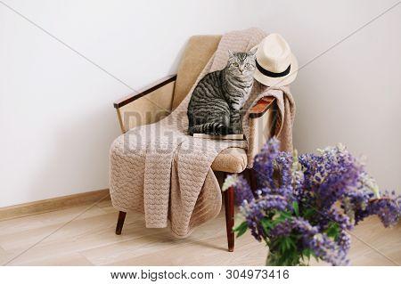 poster of Home Pet Cute Kitten Cat. Cute Scottish Straight Cat Sitting In Armchair. Cat Portrait. Cute Cat Ind