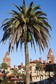 Palm In Front Of Flagler College