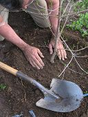 foto of planting trees  - Planting a tree - JPG