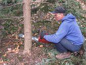 Mann schneiden Hemlock-Baum