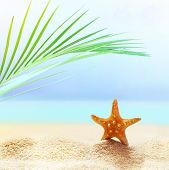 Summer Beach Background. Sand, Palm Leaf, Starfish, Sea And Sky. Summer Concept poster