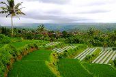 Rice Paddy Fields, Bali, Indonesia