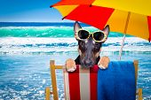 Bull Terrier  Dog Resting And Relaxing On A Hammock Or Beach Chair Under Umbrella At The Beach Ocean poster
