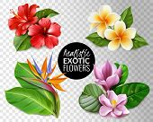 Raelistic Exotic Flowers Transparent Background Set. Collection Of Tropical Flowers On Transparent B poster