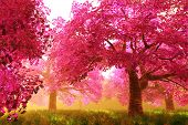 foto of breathtaking  - Mysterious Japanese Cherry Blossom Tree Sakura 3D render - JPG