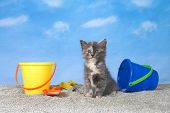 Adorable Dilluted Tortie Kitten On Kitty Litter Sand Beach Looking Directly At Viewer, Bright Bucket poster