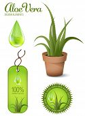 Aloe Vera, design elements, illustration.