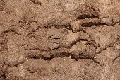 Dirty Dry Dark Brown Soil Sand Earth Land Ground. Natural Environmental Textured Abstract Background poster