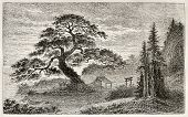 Holy Cedar in Yedo (Tokyo) suburb, old view. Created by Lancelot after Japanese engraving by unknown