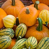 Organic pumpkins and delicata squash