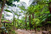 Big Tree Fern On Rain Forest At Siriphum Waterfall With Stone Walkway And Pavilion At Doi Inthanon N poster