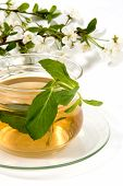 Herbal Tea With Mint poster