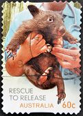 A stamp printed in Australia shows Tasmanian devil rescued