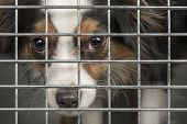Dog In A Cage