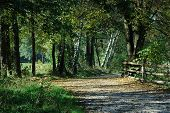 picture of gory  - A winding path in the woods in Poland - JPG