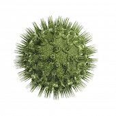 picture of virus scan  - Bacteria virus render in green color isolated on white - JPG