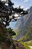On the top of Samaria gorge