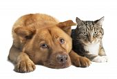 stock photo of mutts  - Dog and cat together on white background - JPG