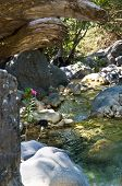 stock photo of samaria  - Mountain creek in a deep shade at Samaria gorge - JPG