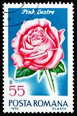 Postage stamp Romania 1970 Pink Luster, Rose Cultivar