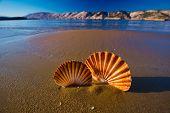 Beautiful landscapes shells on the beach in Croatia