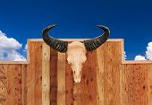 stock photo of bestiality  - Skull cow front view hung on wooden wall - JPG