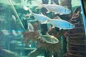 Marine Animals.