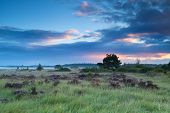 picture of marshes  - summer sunrise over marshes with flowering heather - JPG