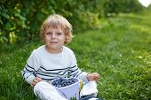 Little Boy Picking Blueberry On Organic Self Pick Farm