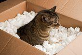 Curious cat in cardboard box