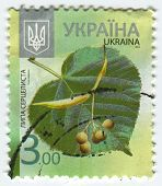 UKRAINE - CIRCA 2013: A stamp printed in Ukraine shows image of the Tilia cordata  is a species of T
