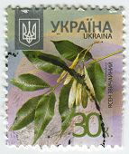 UKRAINE - CIRCA 2013: A stamp printed in Ukraine shows image of the Fraxinus excelsior  known as the ash, or European ash or common ash to distinguish it from other types of ash, circa 2013.