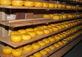 Natural Aging Of Dutch Cheese, Netherlands