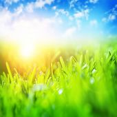 Beautiful spring landscape, fresh green grass, blue sky, bright yellow sun light, gorgeous warm weather, springtime season concept