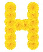 Letter H Made From Dandelions