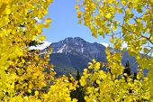 Colorado Mountain View Thorugh Yellow Aspen Leaves Like A Window During Foliage Season