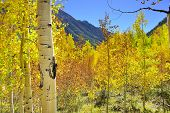 Yellow, Red And Green Aspens And Colourful Mountains Of Colorado During Foliage Season