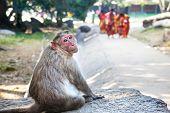 Monkey In Mamallapuram