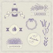 picture of lavender plant  - Lavender herb flower - JPG