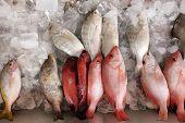 Fresh raw fish displayed on ice at supermarket