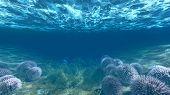 Anemones Underwater