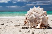Seashell On Tropical Beach, Boracay
