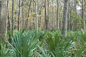 Ace Basin Palmetto Forest South Carolina