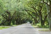 pic of canopy  - Oak canopied South Boundary Street in Aiken South Carolina - JPG