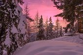 picture of laplander  - Snow trees during sunset in a ski resort area in Lapland - JPG