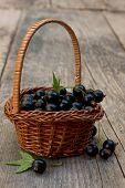 basket full of black currant