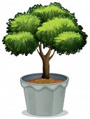 Illustration of a single potted plant